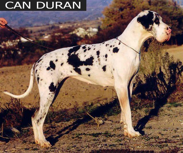 kirchen_can_duran_3